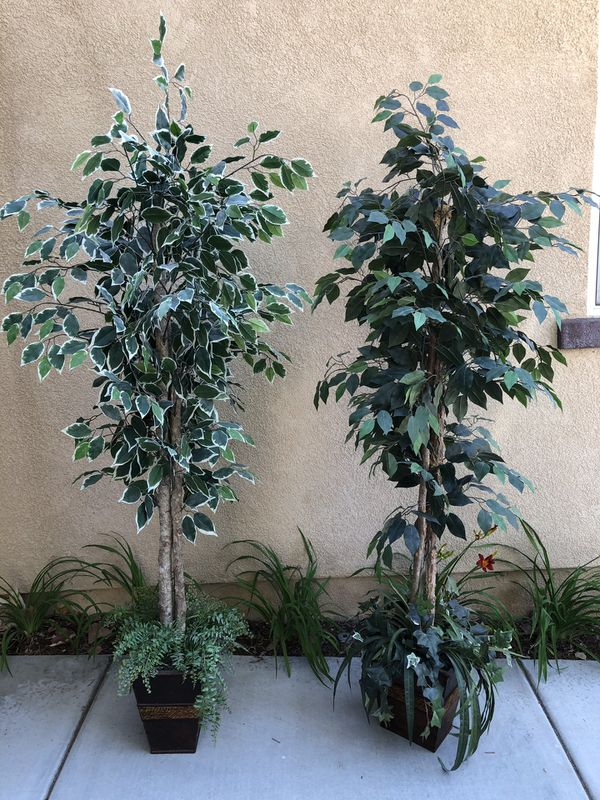 Home or office Indoor decor plant