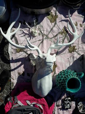 Deer for Sale in Dade City, FL