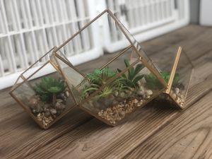 Faux Succulents In Glass Cube for Sale in Atlanta, GA
