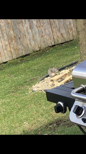 Squirrel picnic table for Sale in Tinley Park, IL