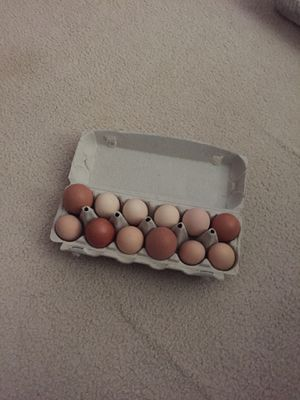 fresh farm brown chicken eggs for Sale in McLean, VA