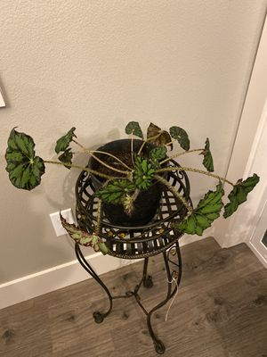 $20 indoor beautiful plant for Sale in Brush Prairie, WA