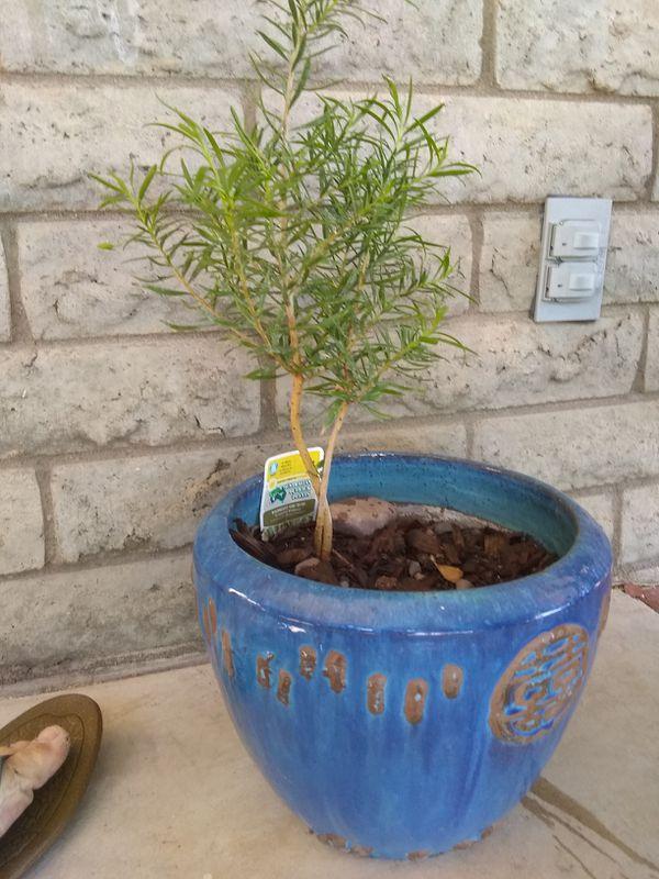 Australian Outback plant