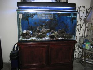 90 gal aquarium complete setup for Sale in Pismo Beach, CA