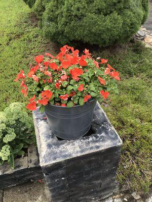 Excellent bucket flowers for Sale in Bridgeport, CT