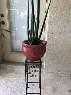 Planter with plant included for Sale in Riverview, FL