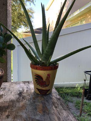 Plants (zabila, Jade, piña hornamental) for Sale in Orlando, FL