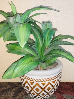 small plant with glass pot for Sale in Winter Haven,  FL