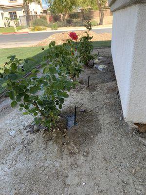 Travajos de lansdcape en Indio cal también ago mantenimiento de jardín for Sale in Indio, CA