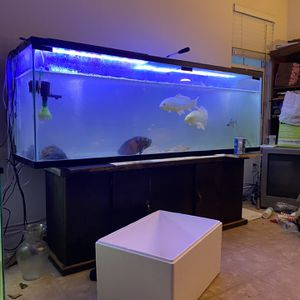 Fish Tanks - For Sale for Sale in Corona, CA