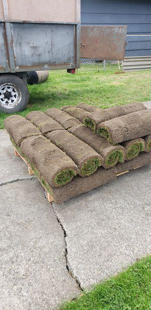 Lawn sod free for Sale in Seattle, WA