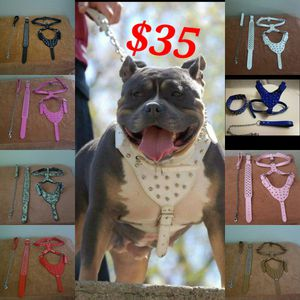 Dog Sets, Leather for Sale in Tolleson, AZ