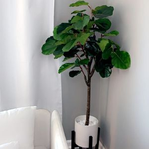MID-CENTURY MODERN 5.5 FT FAUX FIDDLE LEAF FIG for Sale in Washington, DC