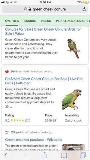 Green Cheek conure Friendly for Sale in Newark, CA