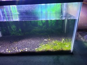 10 gallon Tank for Sale in Tacoma, WA