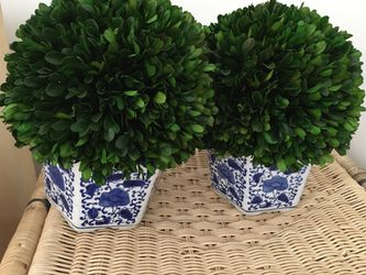 Two topiary trees in blue and white vase for Sale in Hinsdale,  IL