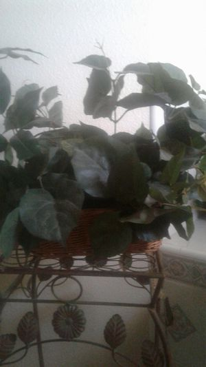 fake plant in basket for Sale in Atwater, CA