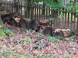 Firewood for Sale in Springfield, VA
