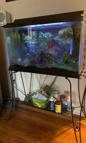 35 gallon fish tank and extras for Sale in Denver, CO