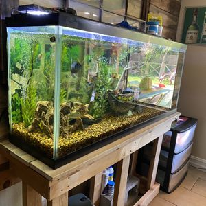 55 gallon fish tank for Sale in Henderson, NV