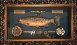 """Rainbow Trout Shadow Box 20""""X11"""" for Sale in Raymore, MO"""