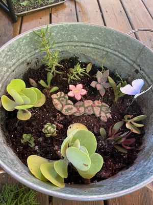 Large Succulent garden for Sale in Kennesaw, GA