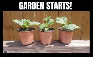 GARDEN STARTS BACK IN STOCK! 100% Organically Grown (Two for $5 or Four starts for $10) for Sale in Jacksonville, FL