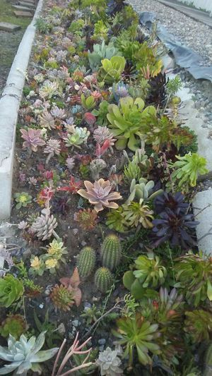 Succulents galore for Sale in San Diego, CA