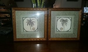 Palm trees for Sale in US