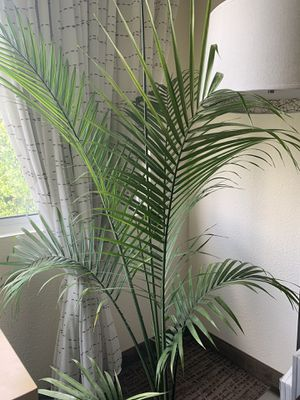 Majesty Palm tree for Sale in Dallas, TX