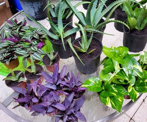 Small colorful plants. $3 each for Sale in Deerfield Beach, FL