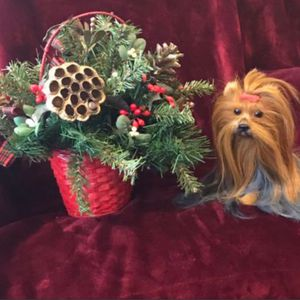 Christmas Decorations for Sale in Houston, TX