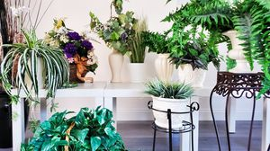 Artificial Plants in Vases for Sale in Henderson, NV