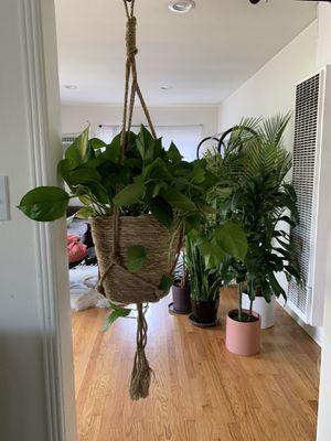 Plant hanger & pot for Sale in Glendale, CA