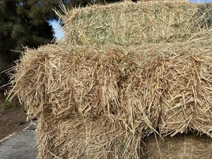 Hay for Sale for Sale in Salinas, CA