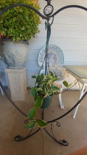 """beautiful hoya in a 6"""" hanging pot for Sale in Moreno Valley, CA"""