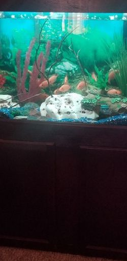 Fish tank For Sale for Sale in Allen,  TX