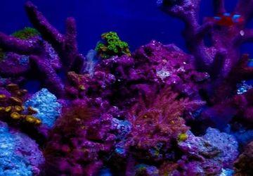 Fish Tank Aquarium for Sale in Perris,  CA