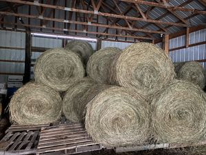 Hay / 5ft Round Bales for Sale in Newton Falls, OH