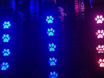 Light Up Dog Collars. $8 Each. Sizes In Description for Sale in Zephyrhills,  FL