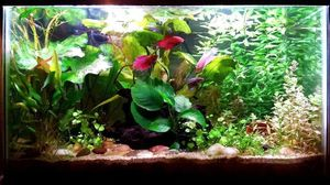 ISO freshwater fish tank supplies for Sale in Everett, WA