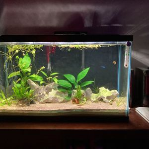 30 Gallon Fish Tank. for Sale in Gambrills, MD