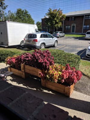 Flower pots for Sale in Grove City, OH