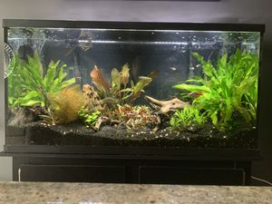 60 gallon Marineland aquarium, and stand for Sale in Silver Spring, MD