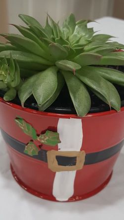 Houseplant/ Succulent In Double Pot 5'H for Sale in Everett,  WA