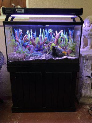 Ball Python Bioactive Terrarium for Sale in Miami, FL
