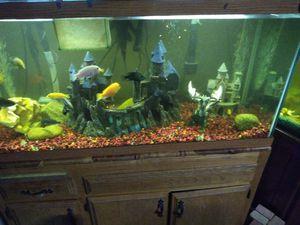 80 gallon fish tank complete for Sale in Bakersfield, CA