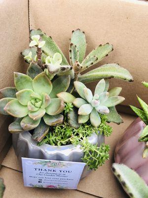 Succulent arrangements plants flower cactus home decor planter for Sale in Miami Gardens, FL