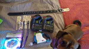 Dog leashes, collars,etc for Sale in Fresno, CA