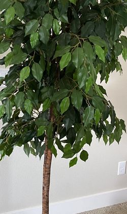 Artificial Indoor Plant for Sale in Aloha,  OR